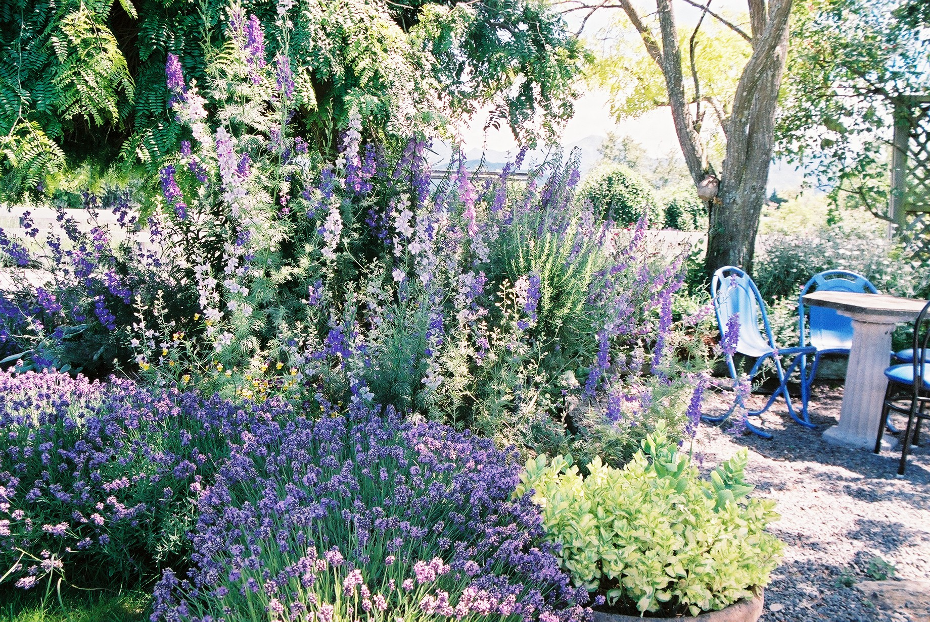 GALLERY_garden